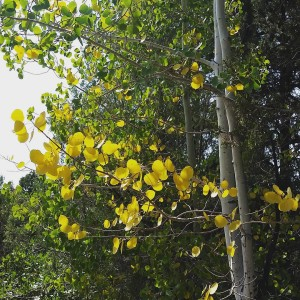 The light is different, there is a slight chill in the air and a few Aspens are getting ready for fall. #fallisaroundthecorner #colorado #bedandbreakfast #visitcolorado #mancoscolorado #visit mancos #colorchange